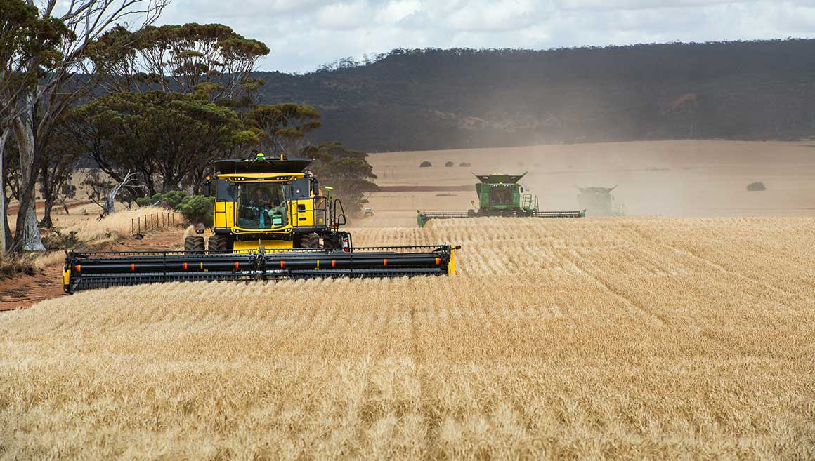 Harvesting at Wongan Hills