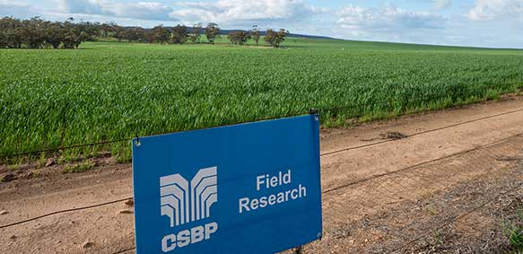 CSBP Field research