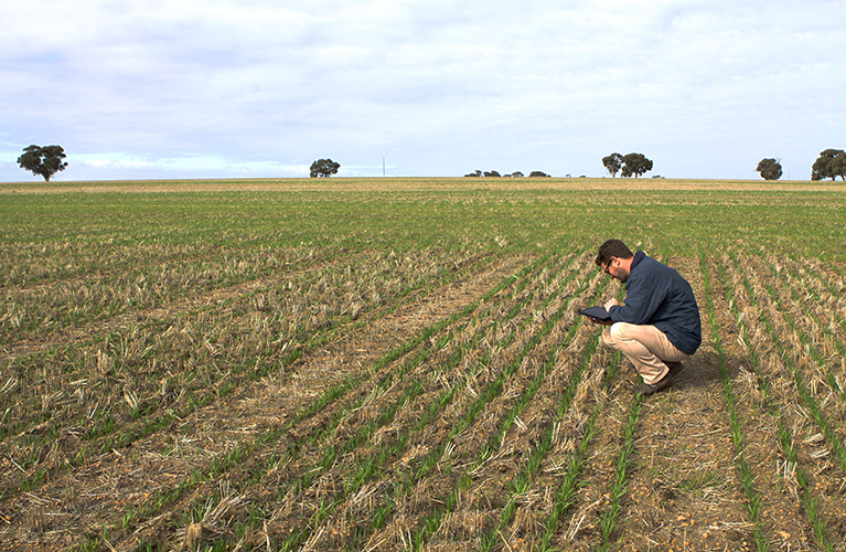 Inspecting trial at Brookton