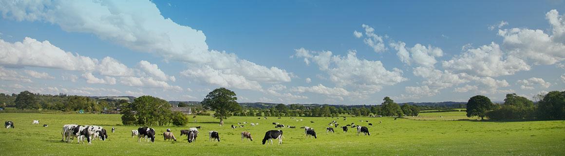 Spring Pasture Offer